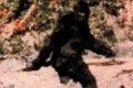 Bigfoot Real And The Result Of Human Women Mating With An 'Unknown Hominin,' Claims U.S. Study