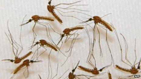 Approval sought for world's 1st malaria vaccine
