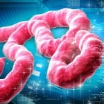 CDC Issues Highest Alert Over Ebola