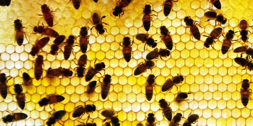 1 dead after bee swarm attacks landscaping crew in Arizona