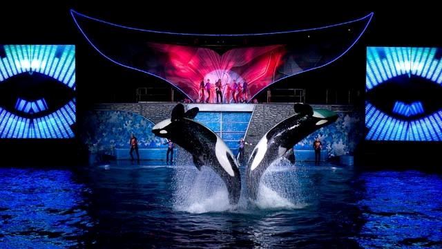SeaWorld CEO to Step Down