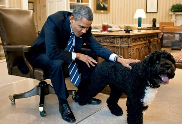 Secret Service Foils Plot Against Obama's Dogs